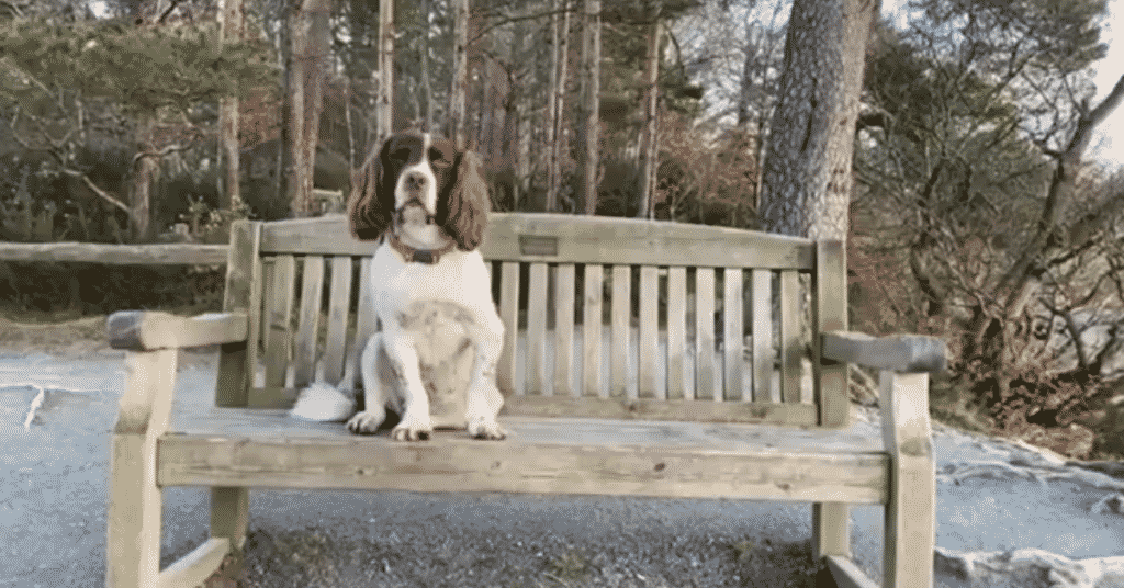 Max Out In The Lake District sits on a bench