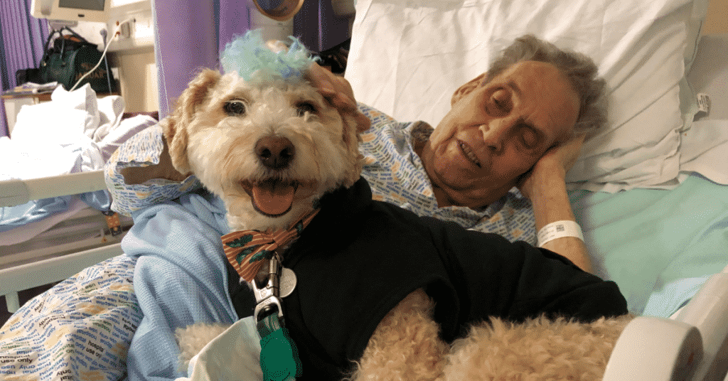 Scooter surfer dog looks to camera with a happy face and bright eyes. An elderly man wearing a hospital gown lies in the bed beside him.