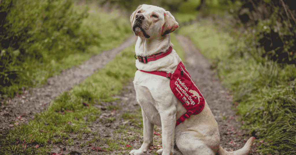 Team Medical Detection Dog pup sits on country road