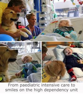 Archie Adams with Leo Southampton Childrens Hospital Therapy Dogs