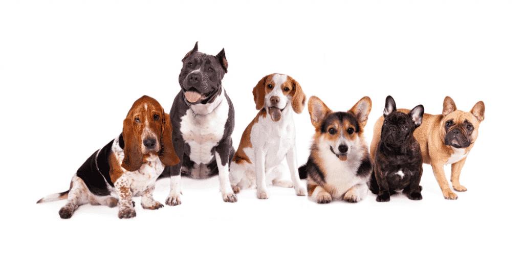 a group of five different dog breeds pose for SuperDog